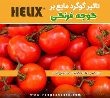 تاثیر-گوگرد-مایع-بر-گوجه-فرنگی-4