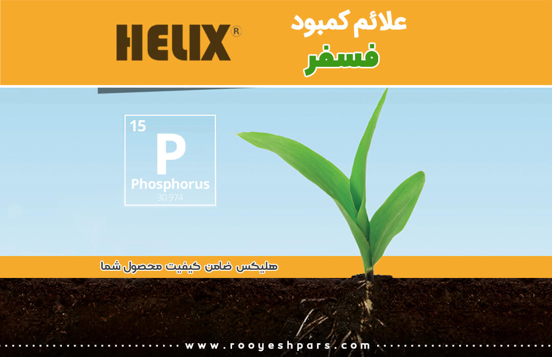 علائم-کمبود-فسفر-در-گیاهان