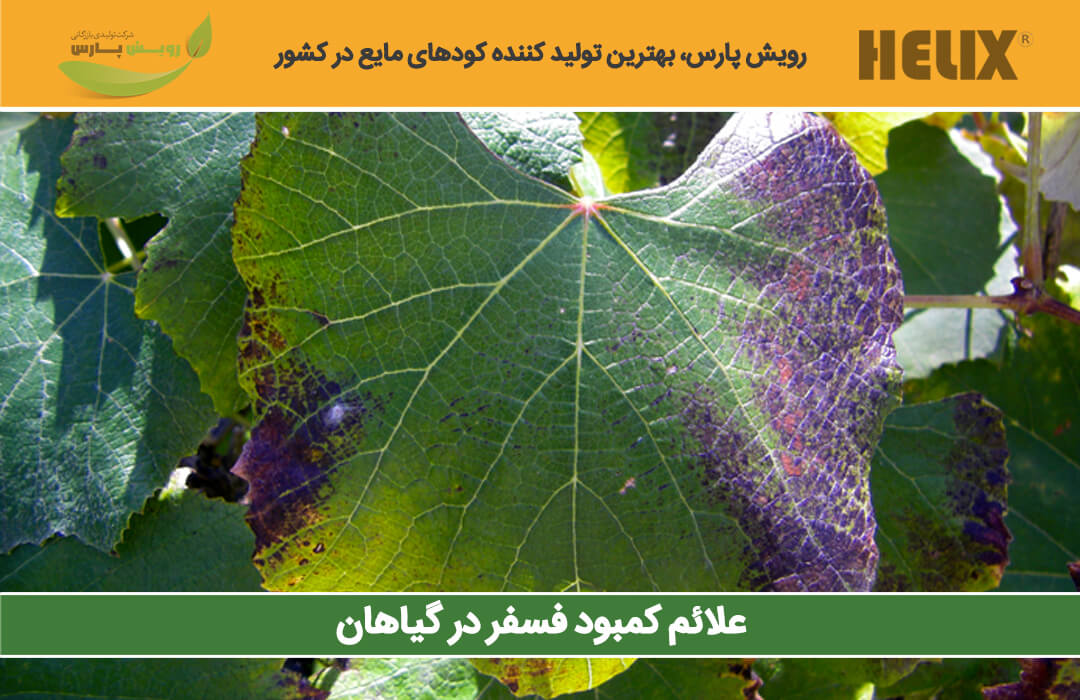 کمبود-فسفر-در-گیاهان