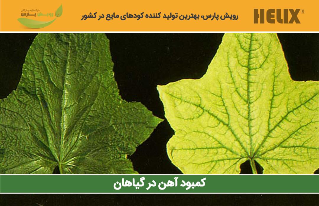 کمبود-آهن-در-گیاهان
