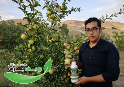 محلول پاشی پلی سولفیت باغات سیب خراسان شمالی