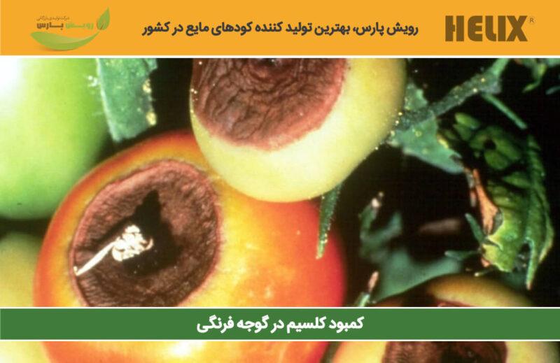 کمبود-کلسیم-در-گوجه-فرنگی