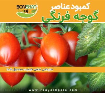 کمبود-عناصر-در-گوجه-فرنگی